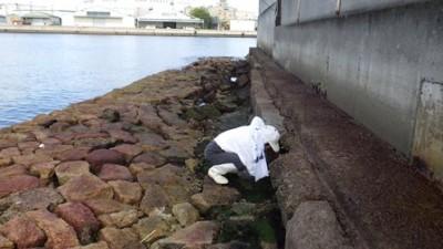 20170921新川橋三菱重工海岸 (79)新川橋