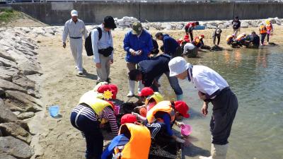 20190515浜山小観察会 (25)